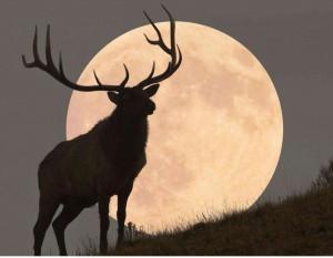 CASA RURAL ECOLÓGICA KAAÑO ETXEA - ciervo-luna