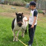 ALEXANDRA, la pony