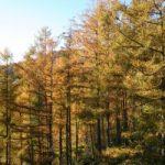 talleres de otoño en kaaño
