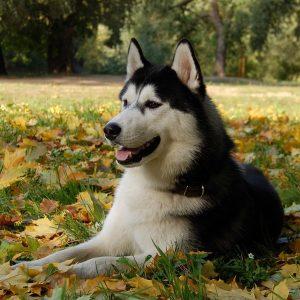 casa rural ecológica kaanoetxea - Guardería canina kaanoetxea - Guardería canina