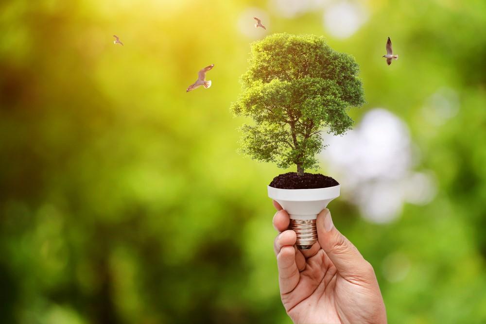 conservar la naturaleza a través de la energía