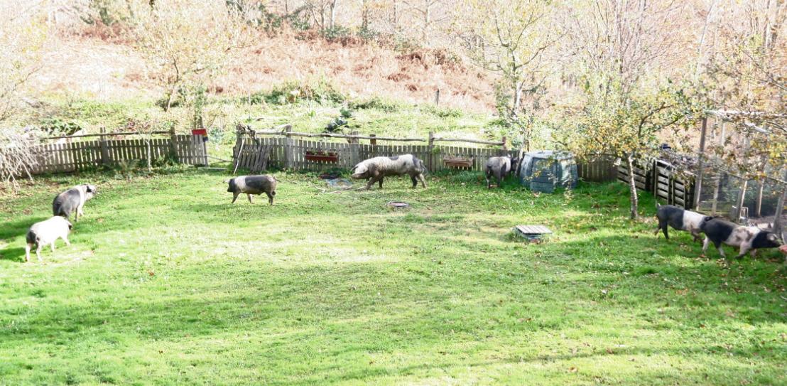 casa rural ecológica Kaaño etxea - 7 cerdos